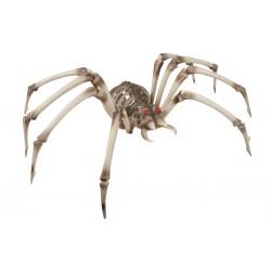 Squelette d'araignée